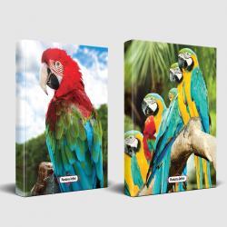Sevimli Hayvanlar Defter Gökkuşağı ve Papağan Ailesi