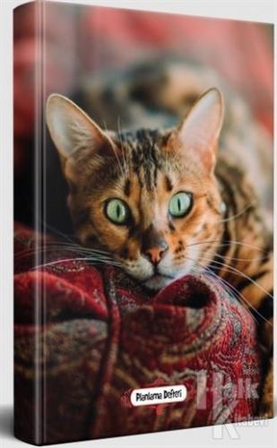 Şaşkın Kedi - Planlama Defteri